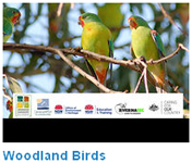 Woodland birds video