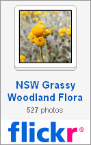 NSW Grass Ecosystems flickr